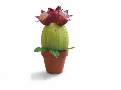 Finto cactus | di kiwi